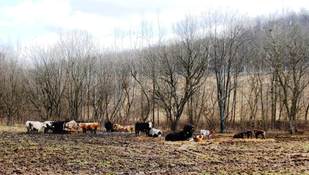 Farm Visit: Double J Farms (2/6)