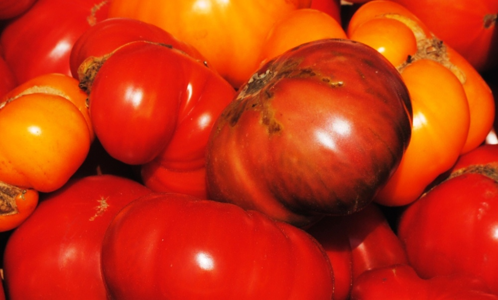 REAL tomatoes (1/6)