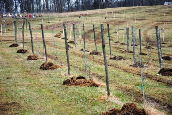 farm vineyardb